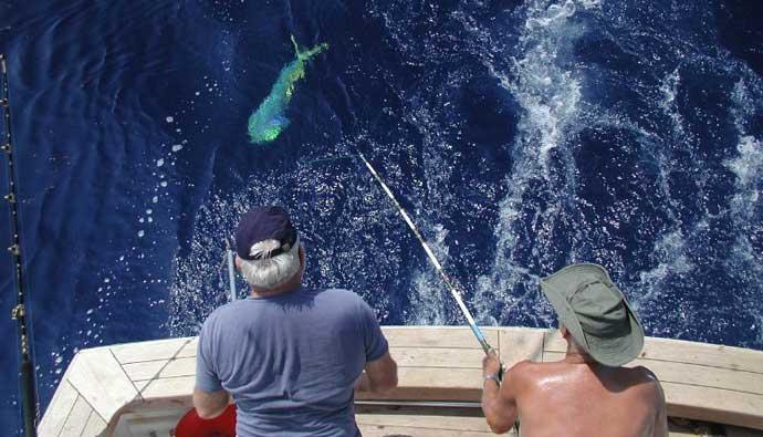 dorado fish mahimahi fishing guide how to catch clean