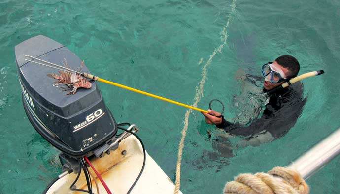 How To Spear Lionfish