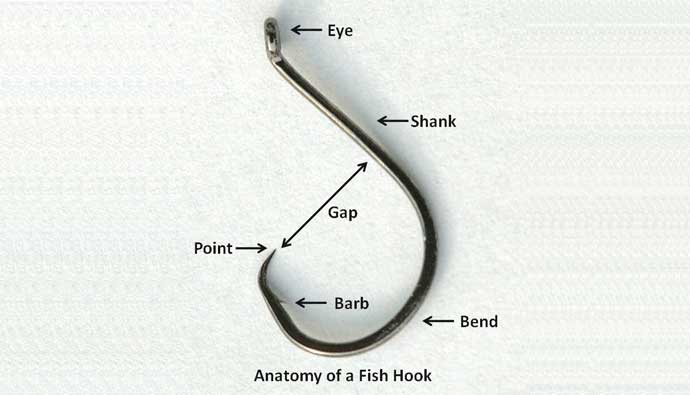 Best Fishing Hooks Anatomy