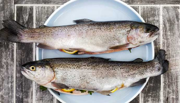 Plate with two trout