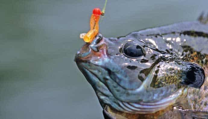 Bluegill caught using an ultralight reel and rod
