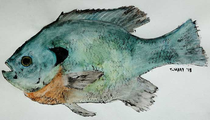 Bluegill Fishing Tips Watercolor