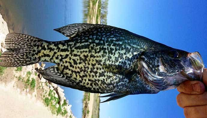 Crappie Fishing Tips Holding