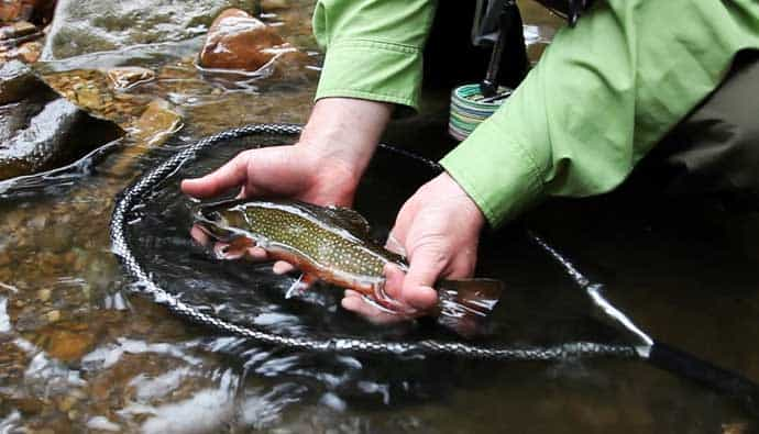 Man with brook trout in a net using brook trout fishing tips