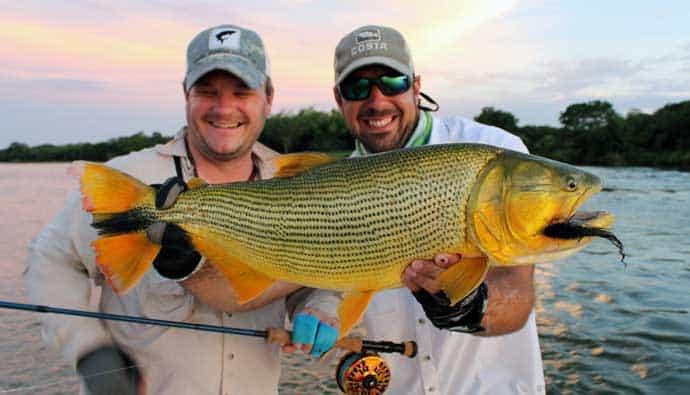 how to catch golden dorado