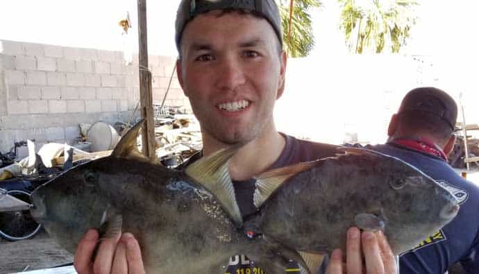 gray triggerfish fishing guide