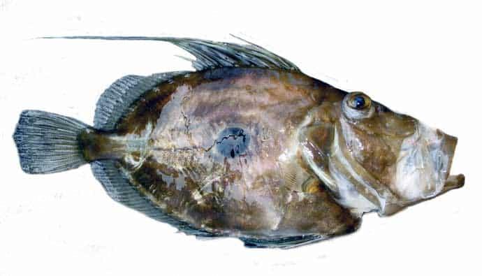 John Dory Fishing Tips