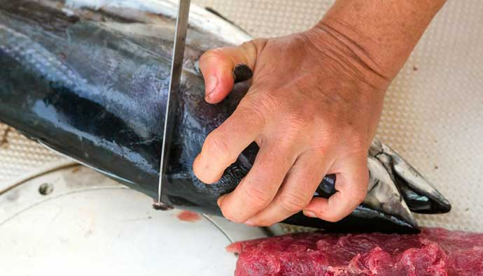 Best fillet knife for saltwater fish tuna