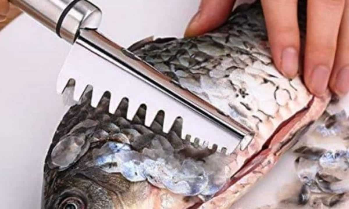 best fish scalers