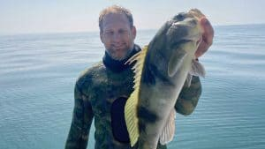 barred sand bass spearfishing tips