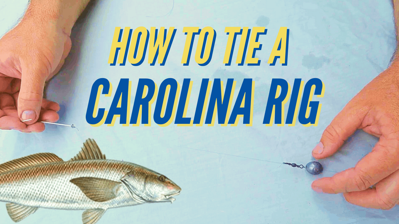 how to tie a carolina rig