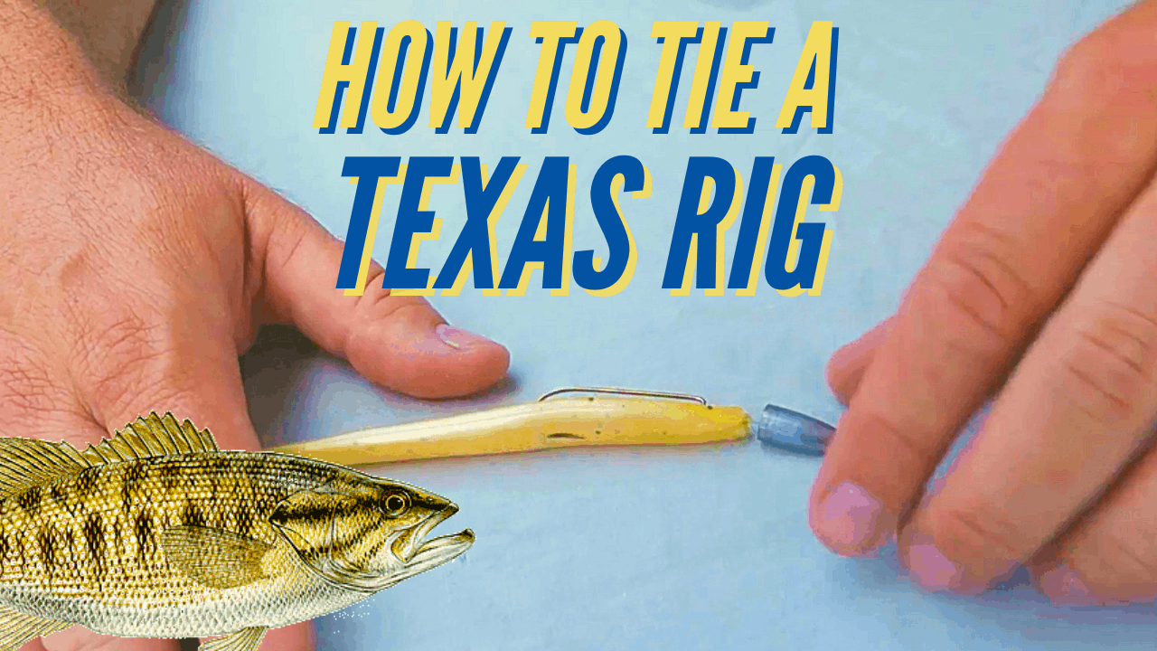 how to tie a texas rig
