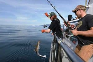 california halibut lures