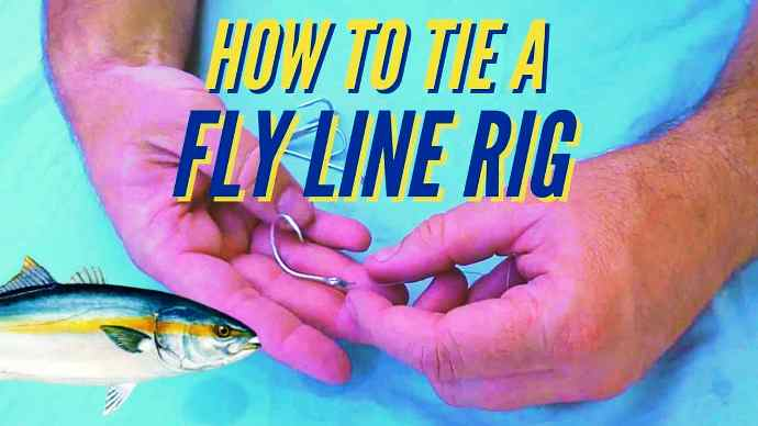 fly line live bait
