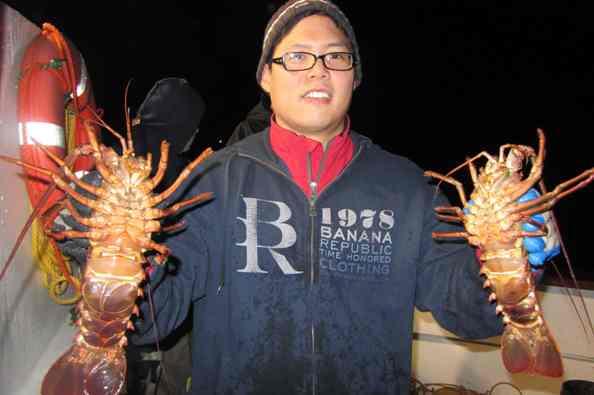 hoop net spiny lobsters