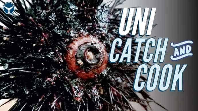 how to eat sea urchin