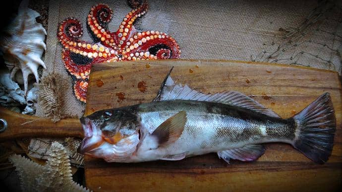 how to cook barred sand bass