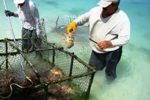 best lobstering gloves