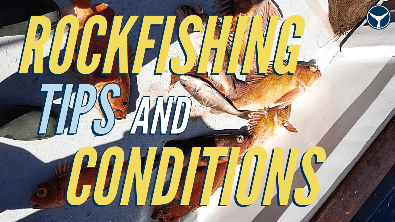 jigging for rockfish