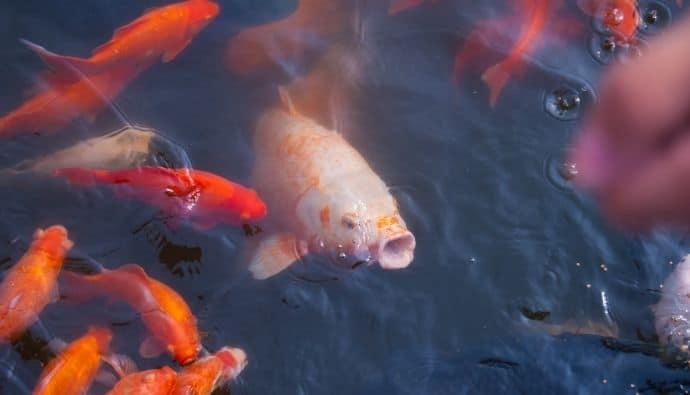 Chumming the Water: How Fishermen Attract Fish