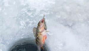 ice fishing bait